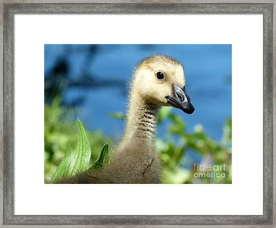 Oh Hi Framed Print by Jane Ford