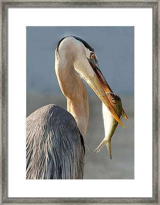 Oh No... Get Me Out Of Here Framed Print by Mariarosa Rockefeller