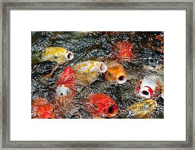 Oh No Why Must They Feed Us Naked Framed Print by Wilma  Birdwell