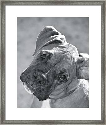 Oh Puppy Framed Print by Barbara Dudley