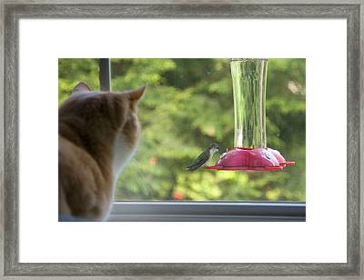 Framed Print featuring the photograph Oh So Close by Larry Landolfi