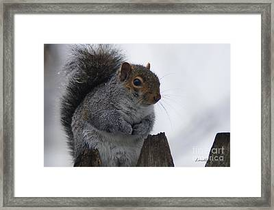 Oh So Cold Framed Print by Lorelle Gromus