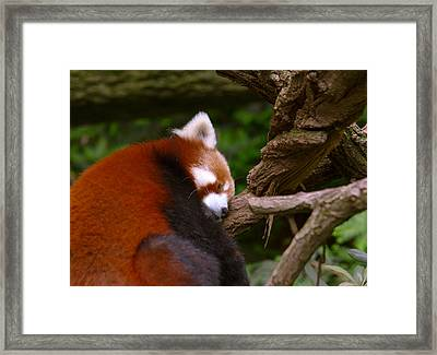 Oh So Sleepy Framed Print