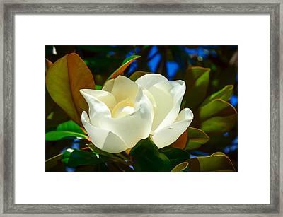 Oh Sweet Magnolia Framed Print by Debra Martz