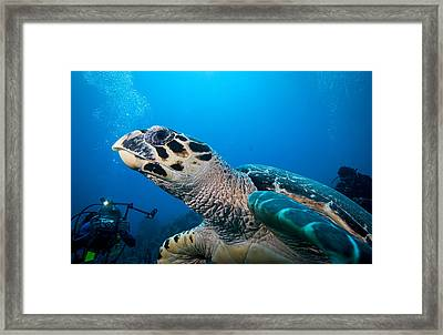 Oh That Paparazzi  Framed Print by Jean Noren