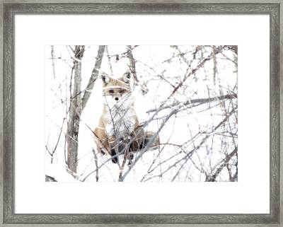 Oh They Can't See Me Framed Print