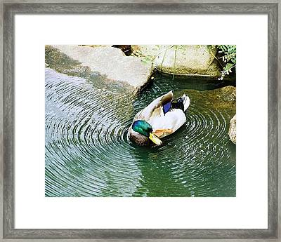 Framed Print featuring the photograph Oh To Be A Duck by Ellen O'Reilly