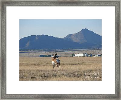 Oh Yes Framed Print by Jeff Pickett