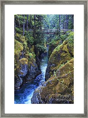 Ohanapecosh River Framed Print by Mark Kiver