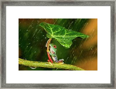 Ohh Noo :( It's Raining Framed Print