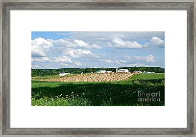 Ohio Amish Farm Framed Print by Lila Fisher-Wenzel