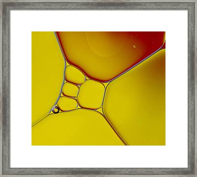 Oil And Water 12 Framed Print by Rebecca Cozart