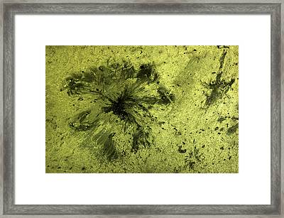 Oil In Water 1 Framed Print