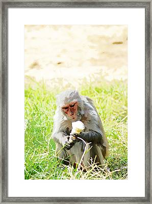 Oil Painting - A Monkey Eating An Ice Cream Framed Print