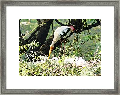 Oil Painting - Mama Stork Feeding Young Framed Print by Ashish Agarwal