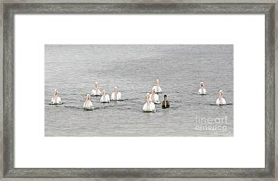 Ok Everybody Look At The Camera And Say 'fish' Framed Print