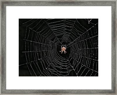 Ok Now Its Your Turn Framed Print by Gloria Warren