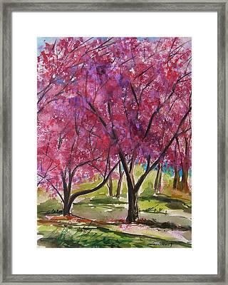 Okame Cherries Framed Print by John Williams