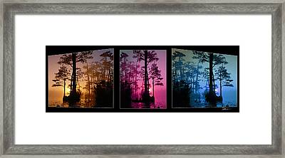 Okefenokee Swamptriptych-featured In Nature Wildlife-nature Photography-and Cards For All Occasions Framed Print by EricaMaxine  Price