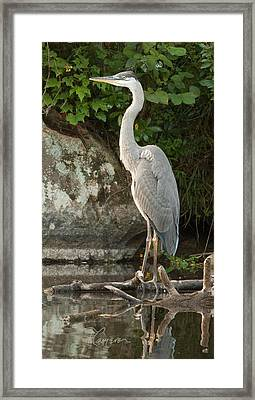 Framed Print featuring the photograph Ol' Blue by Tom Cameron