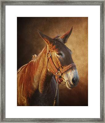 Ol Red Framed Print by Ron  McGinnis