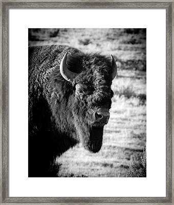 O'l Shag Framed Print