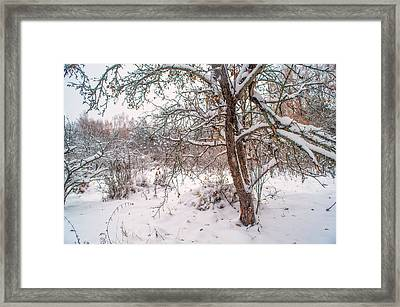 Old Apple Tree In Winter Garden Framed Print by Jenny Rainbow