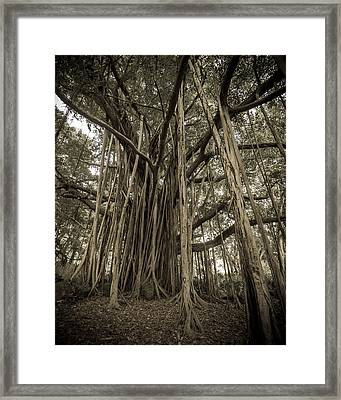 Old Banyan Tree Framed Print