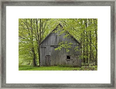 Old Barn In Spring Woods Framed Print