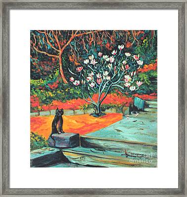 Old Bear Cat And Blooming Magnolia Tree Framed Print by Asha Carolyn Young
