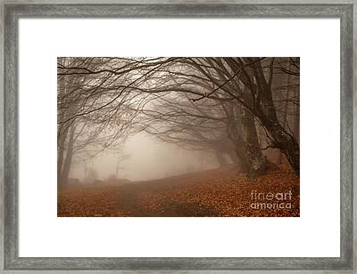 Old Beech Trees In Fog Framed Print by Jivko Nakev