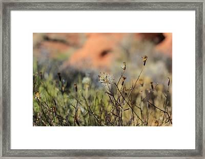 Old Blooms Framed Print