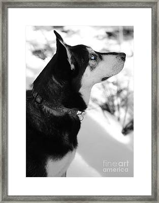 Old Blue Eye Framed Print by Carol Groenen