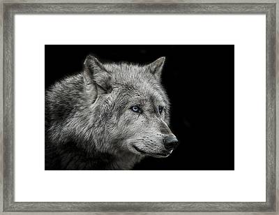 Old Blue Eyes Framed Print by Paul Neville