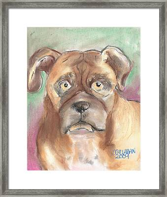 Old Boxer Framed Print by Christine Callahan