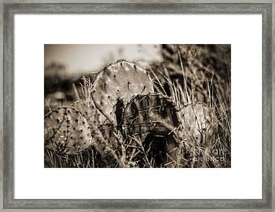 Old Cactus Framed Print by Amber Kresge