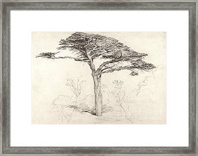 Old Cedar Tree In Botanic Garden Chelsea Framed Print by Samuel Palmer