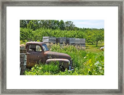 Old Chevy Pickup In Orchard Framed Print by Jeremy Evensen