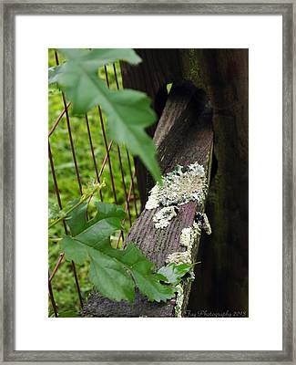 Framed Print featuring the photograph Old Country Fence by Deborah Fay