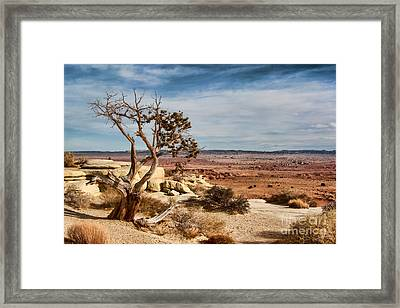 Old Desert Cypress Struggles To Survive Framed Print