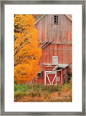 Old Dilapidated Country Barn During Autumn. Framed Print