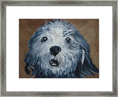 Old Dogs Are The Best Dogs Framed Print