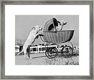 Old Dogs Perform Old Tricks Framed Print
