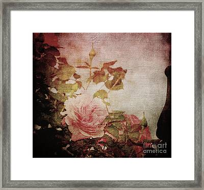 Old Fashion Rose Framed Print