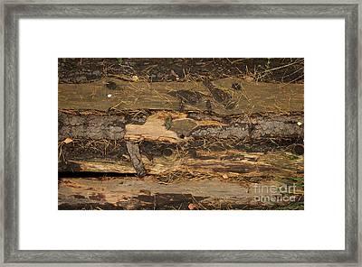 Old Forest Boards Framed Print by Jolanta Meskauskiene