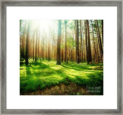 Framed Print featuring the photograph Old Forest by Boon Mee