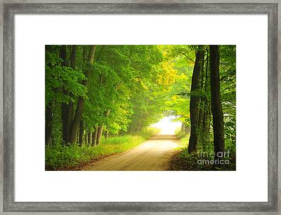 Old Forest Road In Autumn Framed Print by Terri Gostola