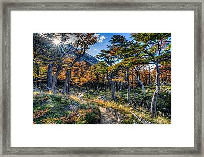 Old Forest Framed Print by Roman St