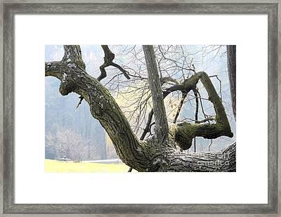 Old Friends 3 Framed Print by Leo Symon