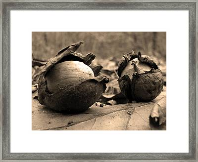Framed Print featuring the photograph Old Friends by GJ Blackman